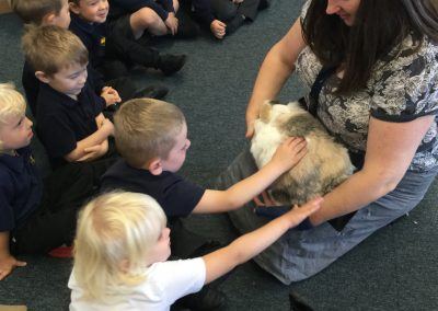 Rabbits move in to Reception!